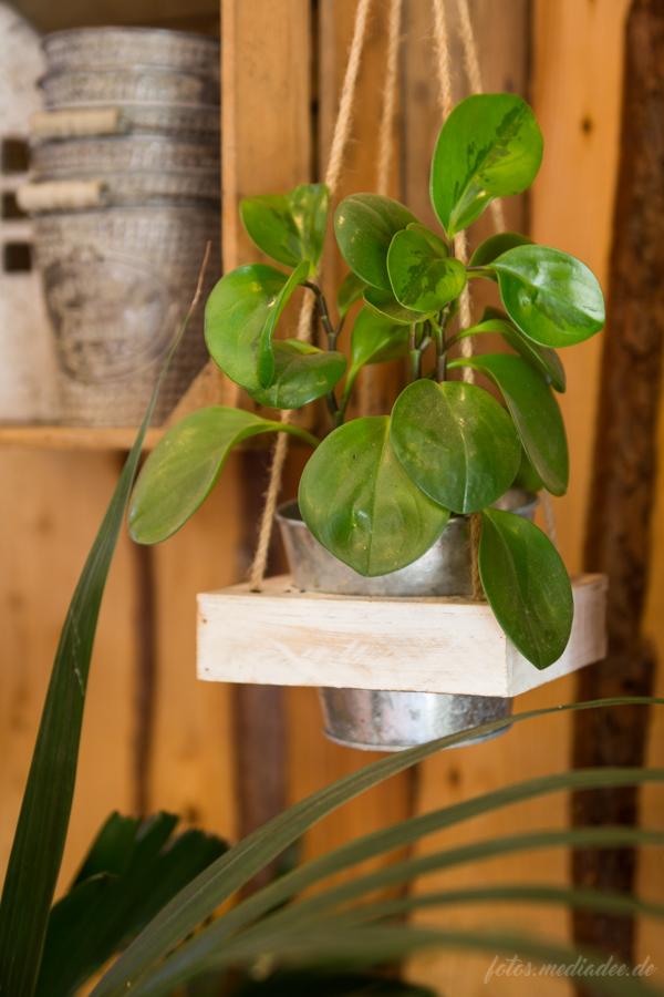 pflanzschalen topfpflanzen natur pur ForBesondere Topfpflanzen